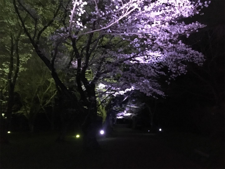 f:id:Sasuraiinko:20190401211515j:image