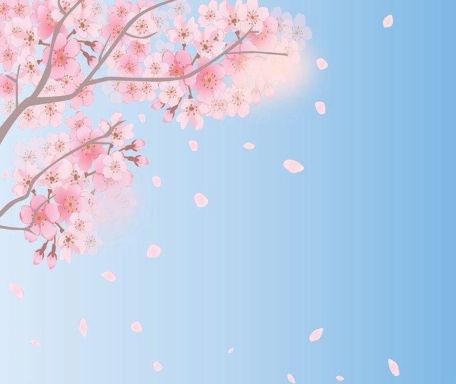散っていく桜