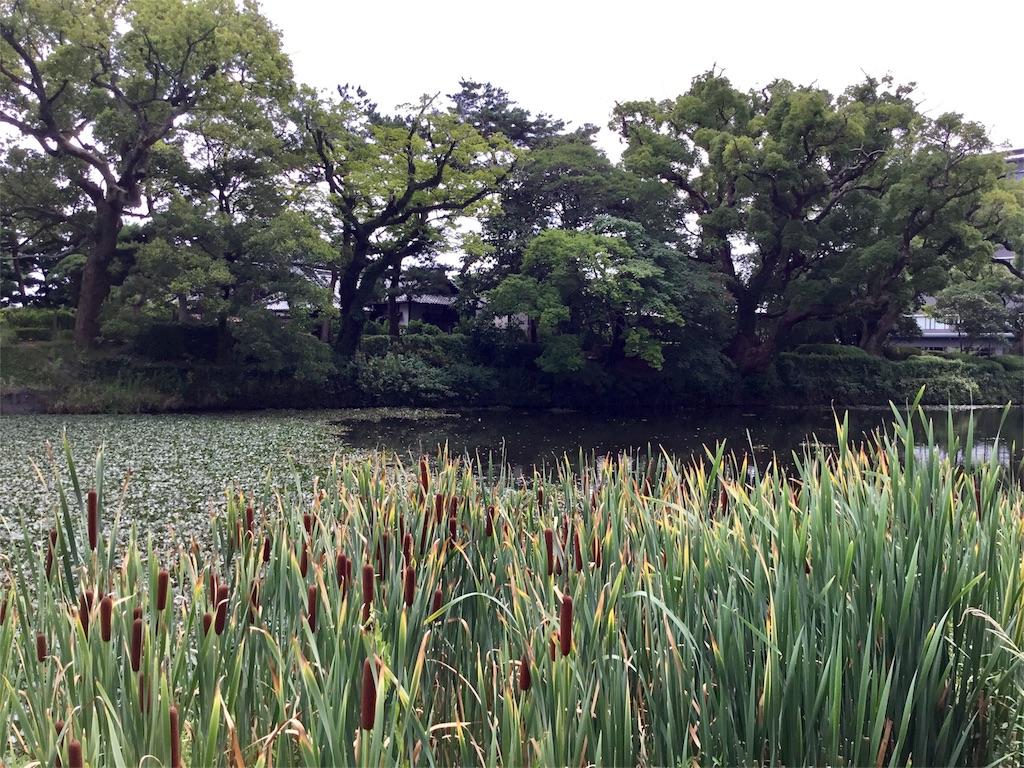 f:id:Satomi_KAWASAKI:20170816140812j:image