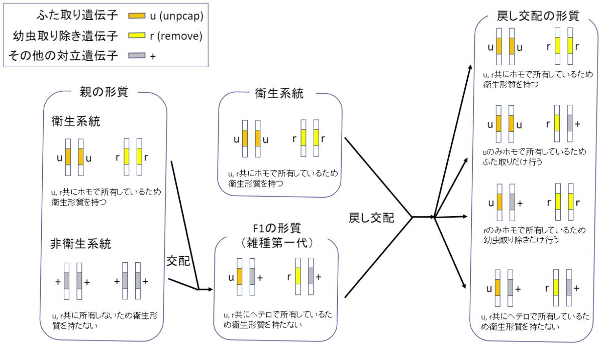 f:id:SatoshiWatanabe:20190804195352p:plain