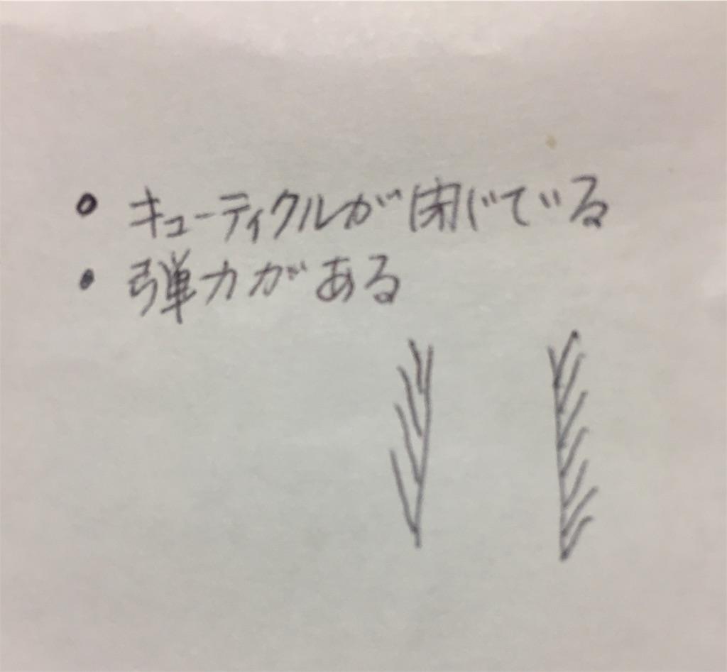 f:id:Satoyuki:20190905005009j:image