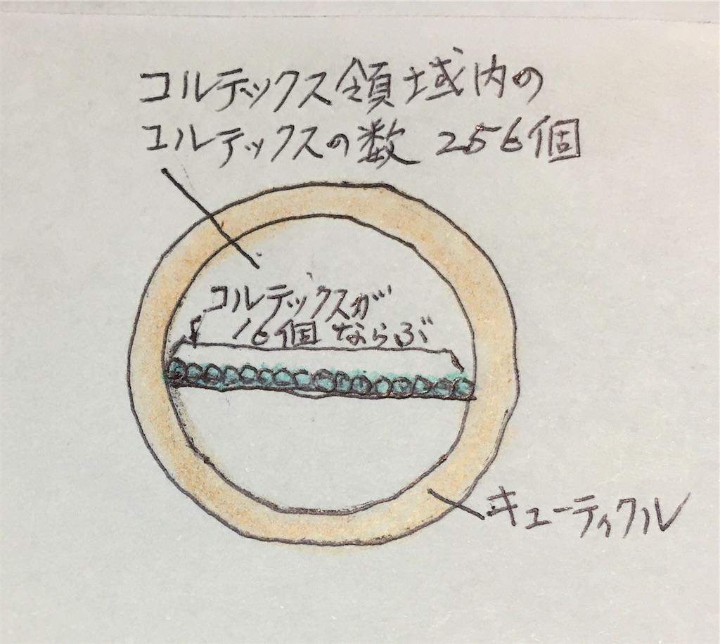 f:id:Satoyuki:20191013220340j:image