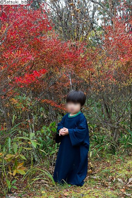 f:id:Satsuki_bib:20181117205605j:plain