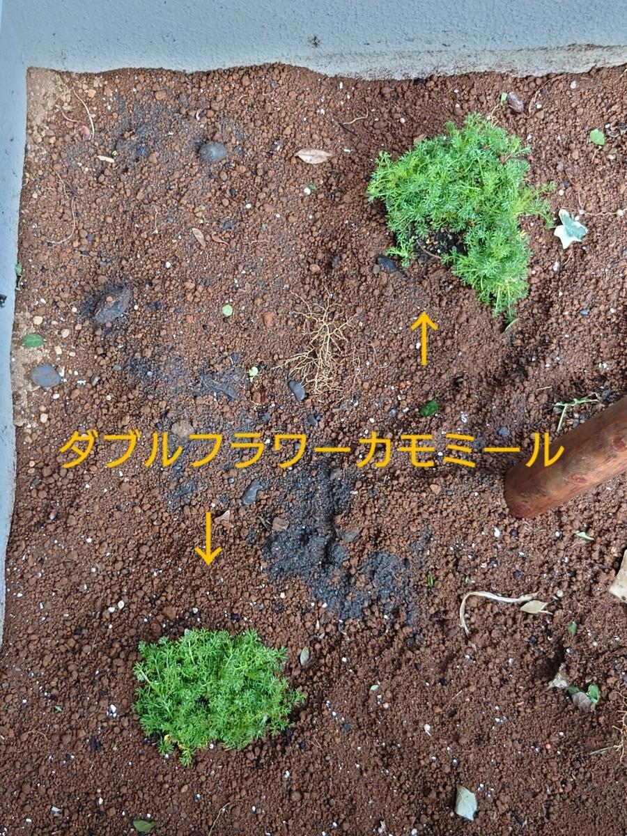 f:id:Sayacchi:20210401214151j:plain