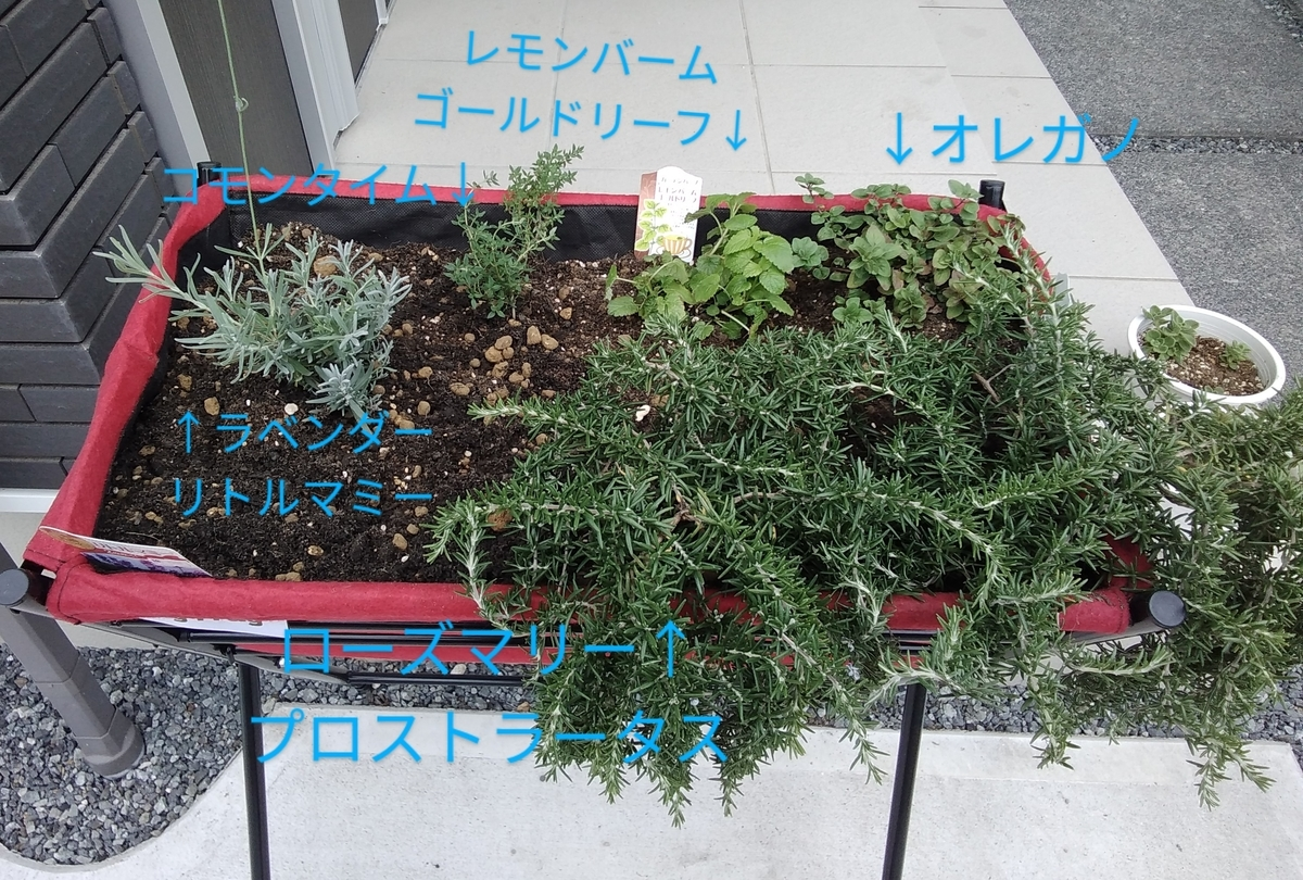 f:id:Sayacchi:20210627175319j:plain