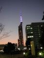 [夕日][福岡タワー]