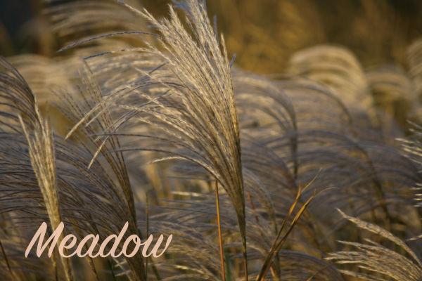 ススキの草原