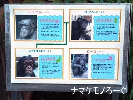 nogeyama-zoo-20190813-3