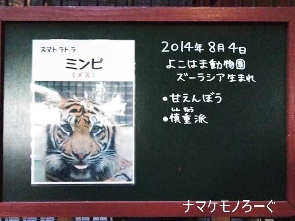 nogeyama-zoo-20190813-4