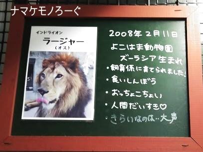 nogeyama-zoo-20190813-5