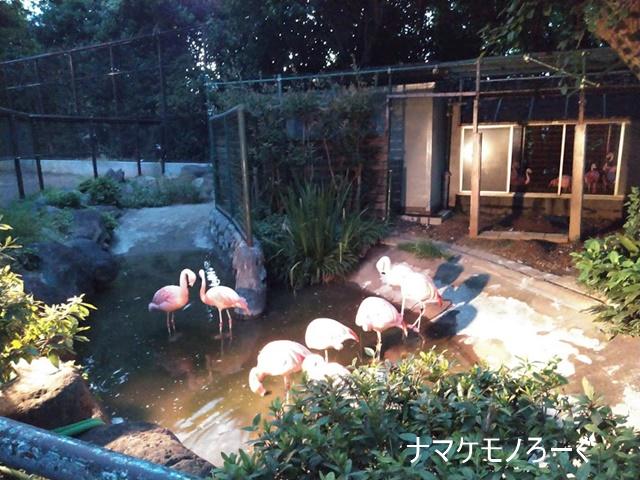 nogeyama-zoo-20190813-6