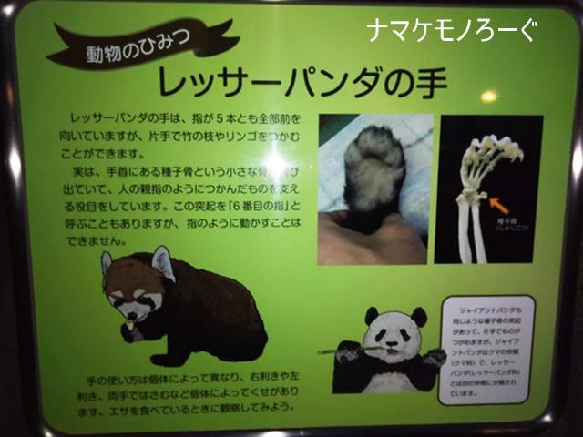 nogeyama-zoo-20190813-7