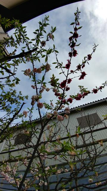 f:id:Setsuga:20170407165238j:plain