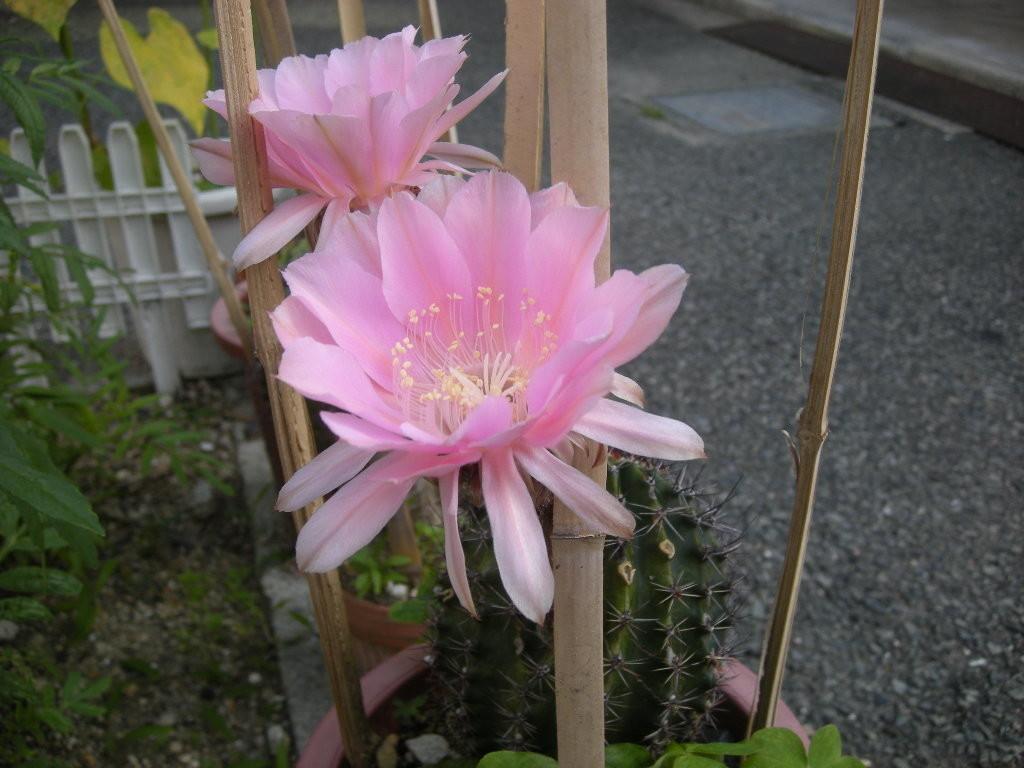 f:id:Shacho-no-Blog:20120710071257j:plain