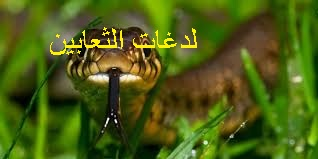 f:id:ShaimaHussein:20170621092356j:plain