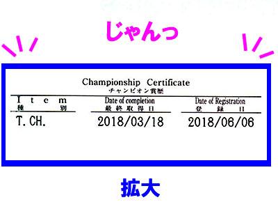 f:id:Shiba-MontBlanc:20190909000919j:plain