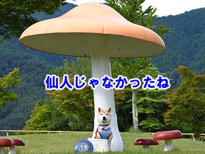 f:id:Shiba-MontBlanc:20200731153426j:plain