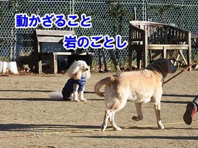 f:id:Shiba-MontBlanc:20201203150158j:plain
