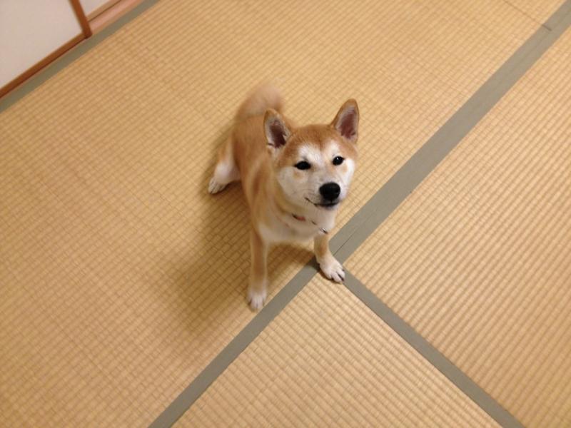 f:id:ShibaKoro:20130107183535j:plain