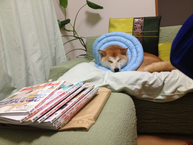 f:id:ShibaKoro:20141128201239j:plain