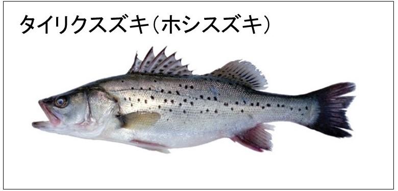 f:id:Shigehara_Nishiki:20200518234106j:plain