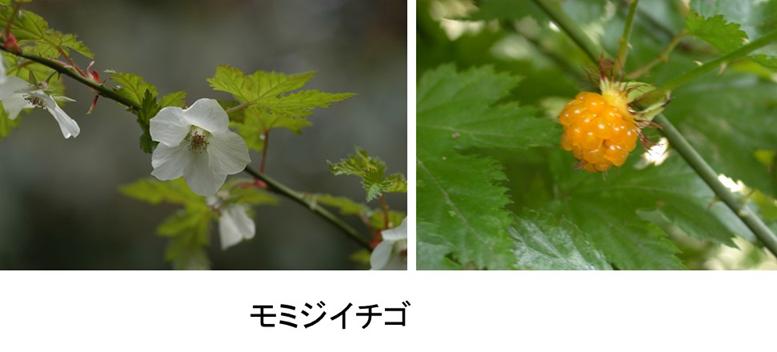 f:id:Shimafukurou:20210505165548p:plain