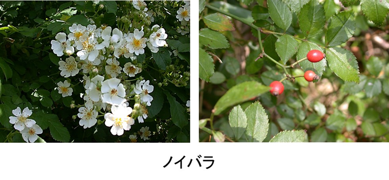 f:id:Shimafukurou:20210505183339p:plain