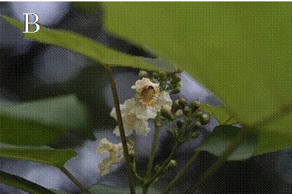 f:id:Shimafukurou:20210515090144p:plain