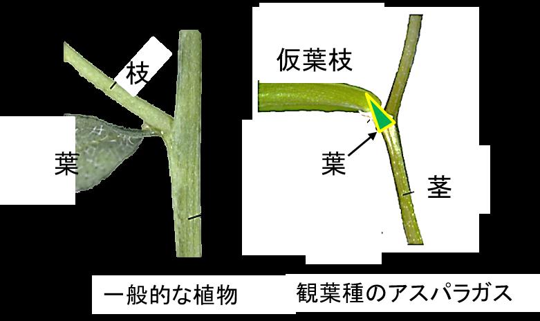 f:id:Shimafukurou:20210624092234p:plain