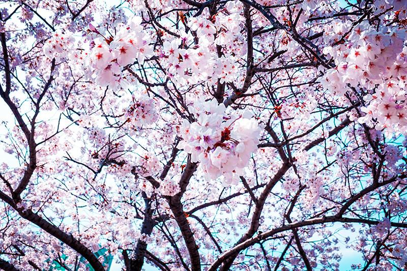 f:id:Shimpachi:20210407110153j:plain