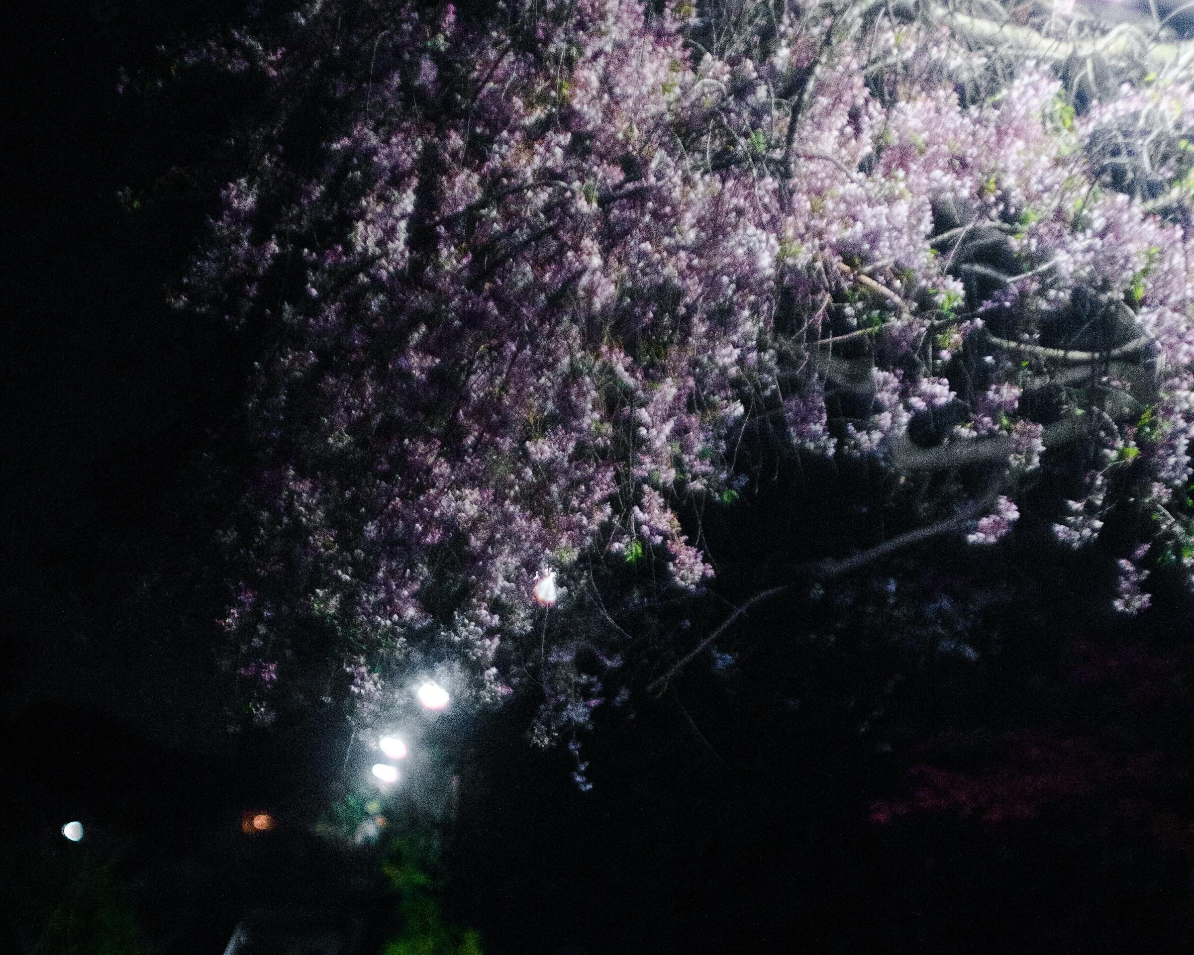 f:id:Shin_34:20210407204405j:image