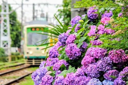 f:id:Shinagawa-manabu:20200607174954j:plain