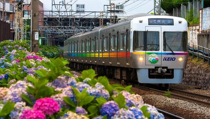 f:id:Shinagawa-manabu:20200619181804j:plain