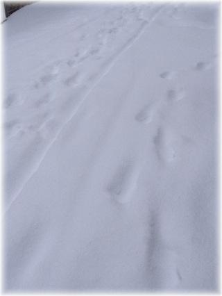 13年ぶりの大雪