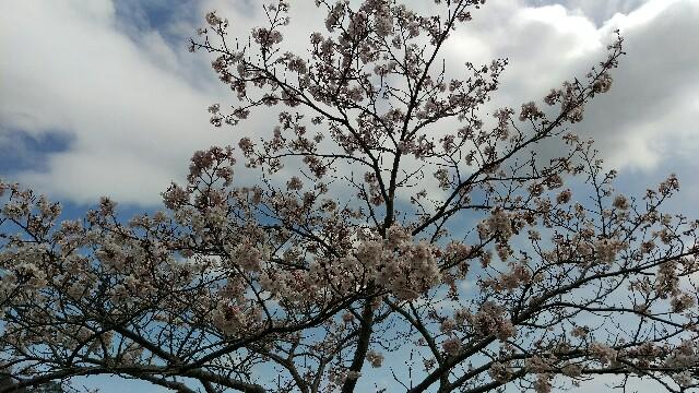 f:id:Shintetsu27:20160404210740j:image
