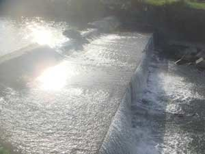 川のせせらぎ 水の流れる音