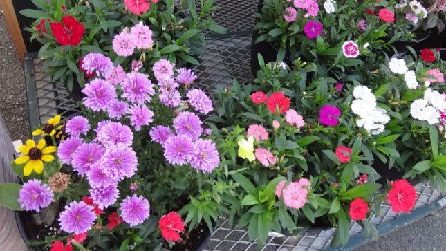 綺麗な花たち