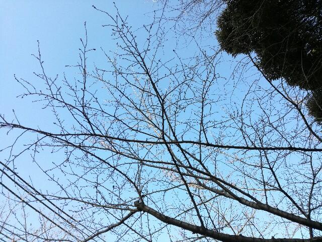 f:id:Shiro-yanaka:20170308162038j:image