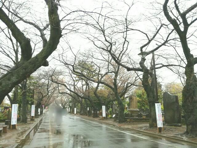 f:id:Shiro-yanaka:20170321223538j:image