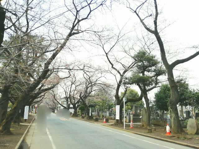f:id:Shiro-yanaka:20170330171934j:image