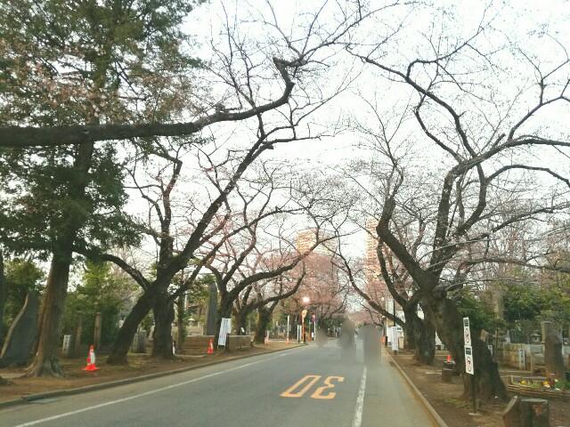 f:id:Shiro-yanaka:20170330232629j:image