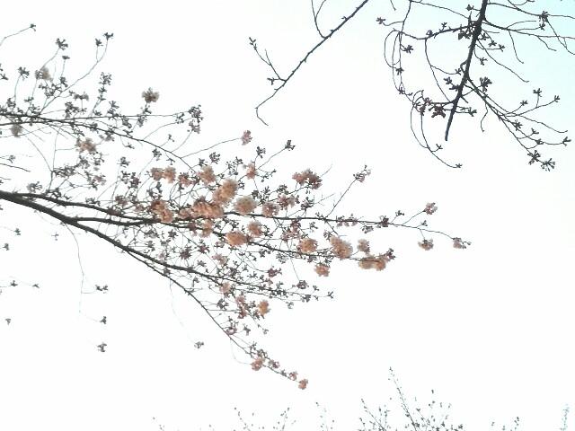 f:id:Shiro-yanaka:20170330232829j:image