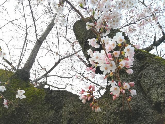 f:id:Shiro-yanaka:20170401184116j:image