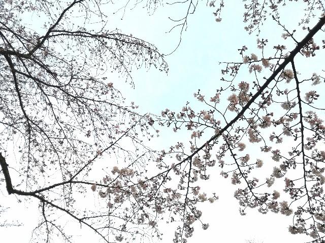 f:id:Shiro-yanaka:20170401184344j:image