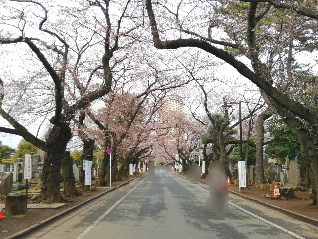 f:id:Shiro-yanaka:20170401184447j:image