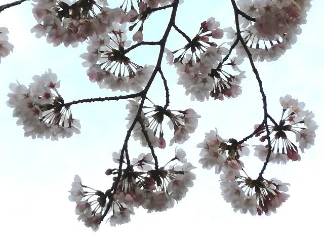 f:id:Shiro-yanaka:20170402042942j:image