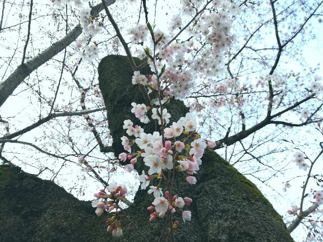 f:id:Shiro-yanaka:20170402052926j:image