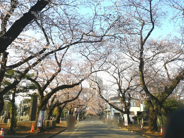 f:id:Shiro-yanaka:20170403235713j:image