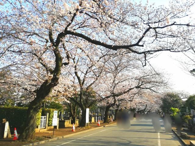 f:id:Shiro-yanaka:20170404195601j:image