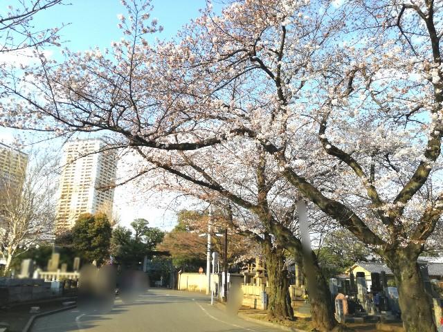 f:id:Shiro-yanaka:20170404195644j:image